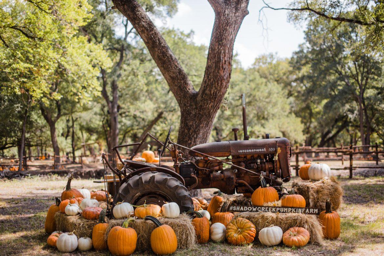 pumpkin patches the woodlands