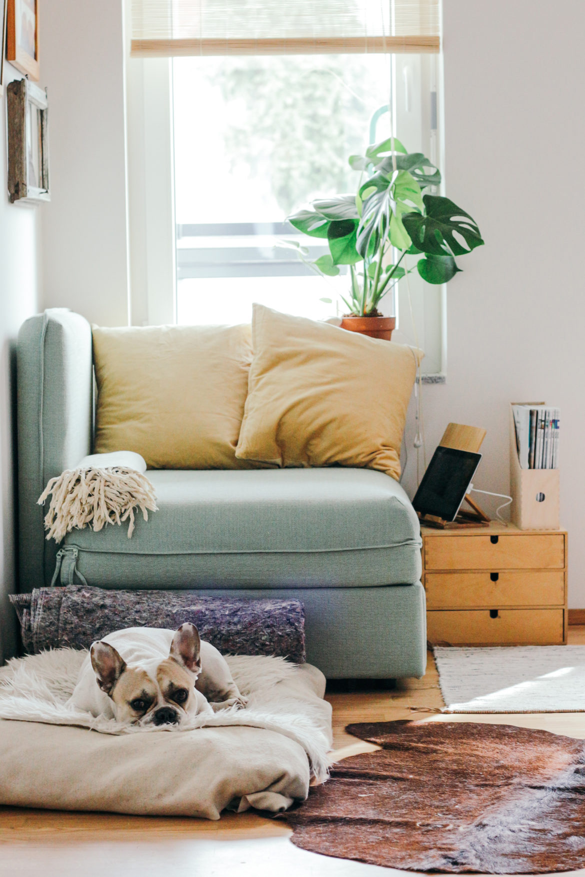 dog on sleep mat in front of couch in front of window